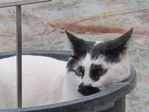Cats of Jardin Botanico - Risager