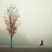The Leaf Thief by Elizabeth Gadd