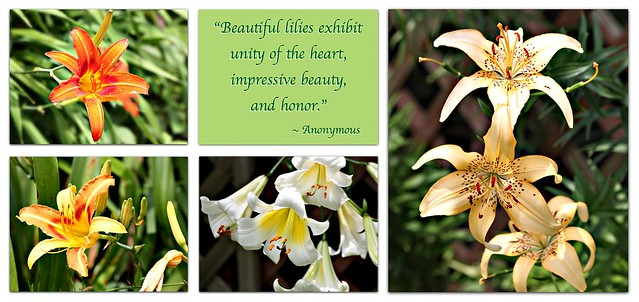 """Beautiful lilies exhibit unity of the heart, impressive beauty,  and honor."""