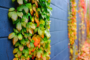 Wall of Autumn Colours