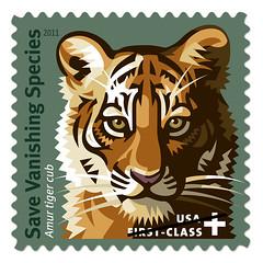 big cats, tiger, postage stamp, illustration,