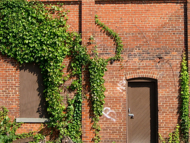 Vine on brick