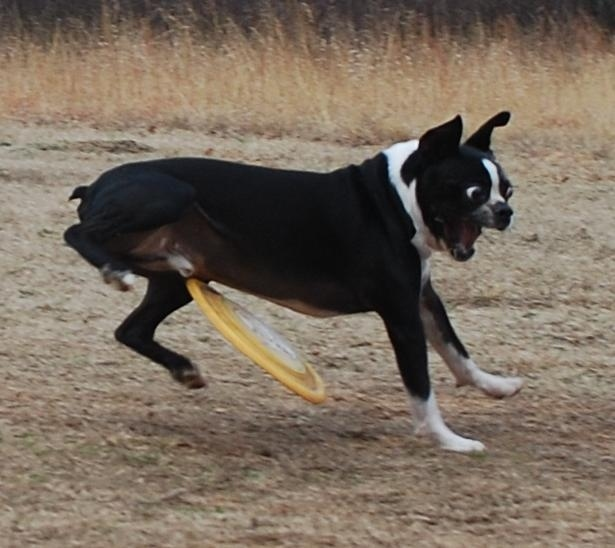 And the perfectly timed unfortunate Frisbee-throw picture: