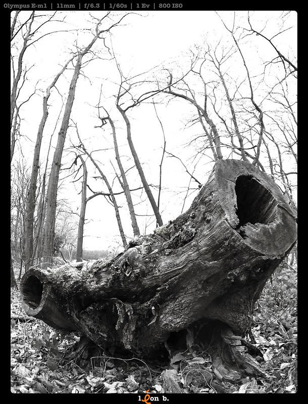 Le peuple de la forêt - Page 4 11782421694_6ec71aefc4_c
