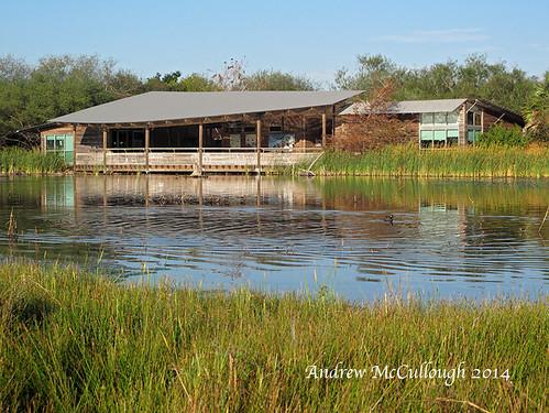 texas weslaco texasbirds worldbirdingcenter esterollanogrande