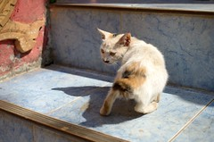 Cats in Pha That Luang, Vientiane, Laos