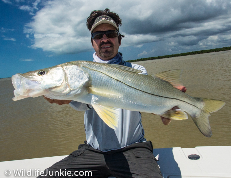 Snook In Everglades