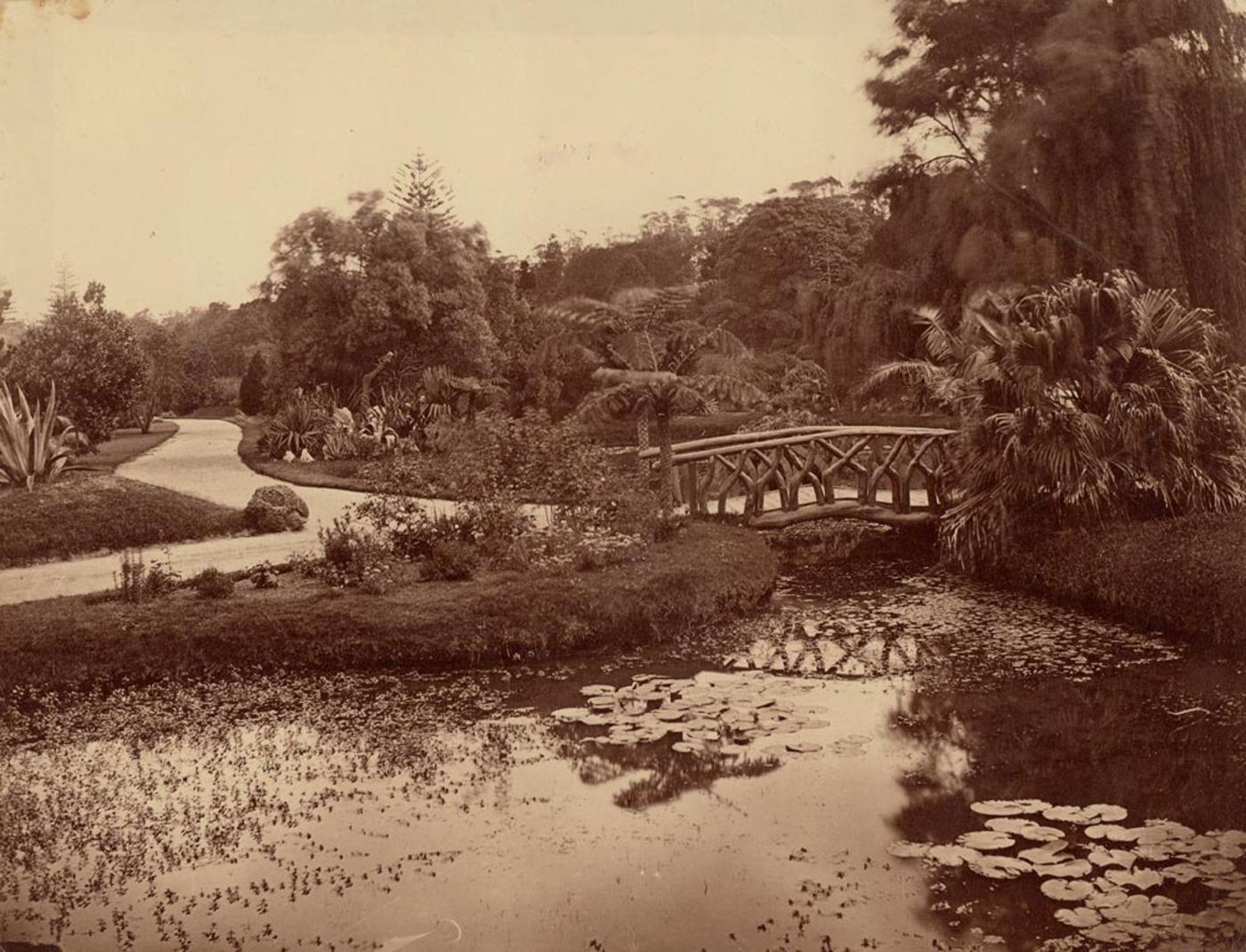 [Pond and bridge, Botanic Gardens, Sydney / attributed to the photographer William Vosper]