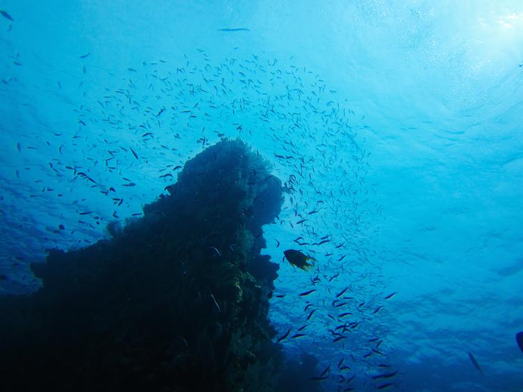 Dive 109