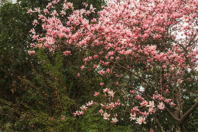 Birmingham Botanical Garden: Fabulous Floral Freebie