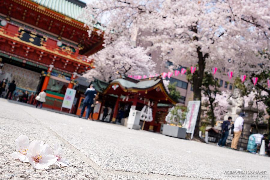 AkibaPhotography0069s