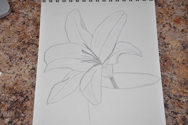 Craftsy drawing class, lesson 3.