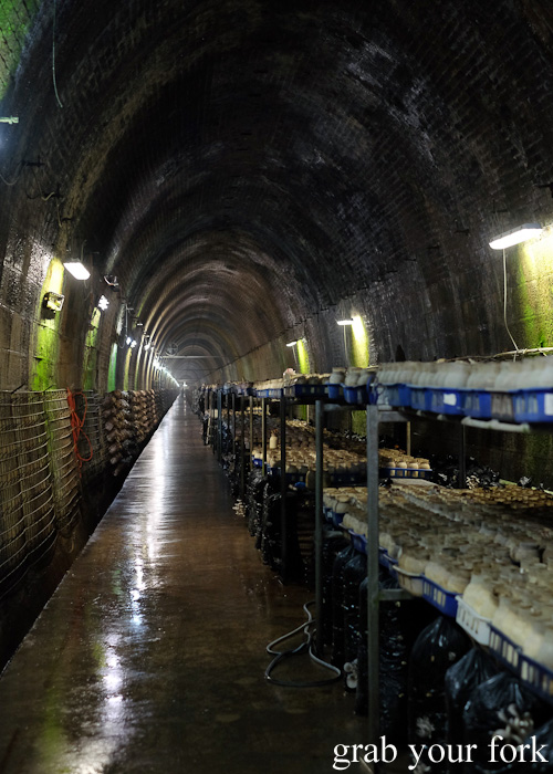 Li-Sun Exotic Mushrooms railway tunnel, Mittagong