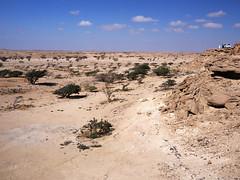 Wadi Dawkah - nature reserve of frankincense trees