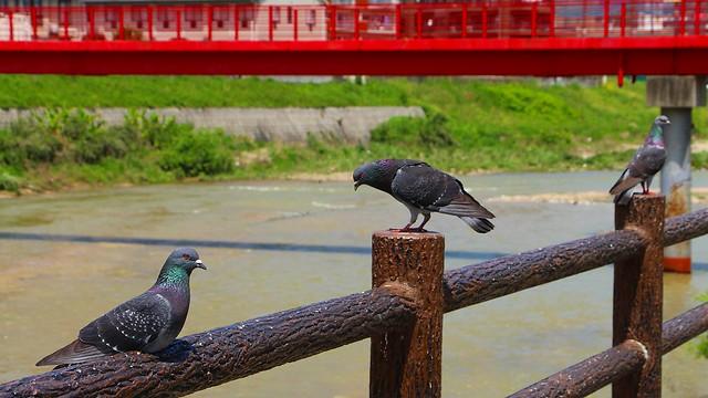 Along Nakagawa River