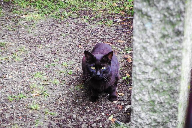 Today's Cat@2016-05-20