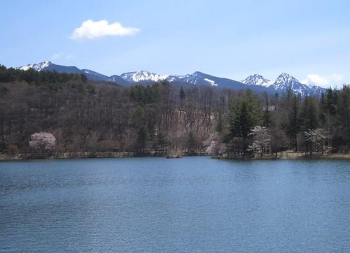 蓼科湖の桜と八ヶ岳 2013年5月7日10:46 by Poran111