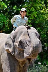 ズーラシアのインドゾウと飼育係のお姉さん (Indian Elephant)
