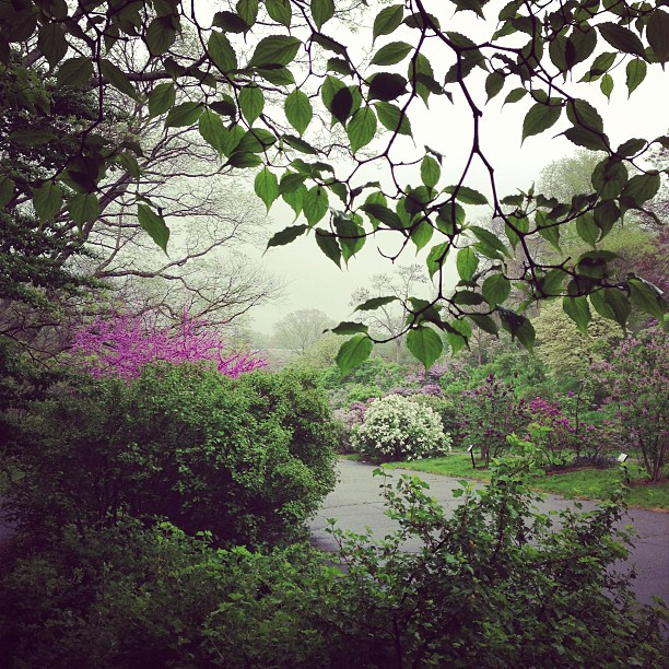 Lilac Sunday. Under a tree. In the rain.