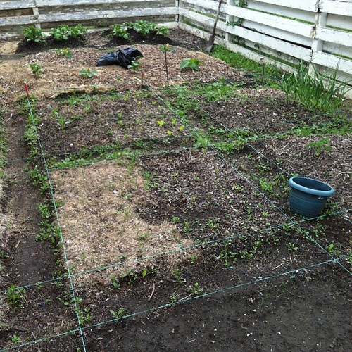 so much weeding to get done before Saturday. stupid rain has prevented me from weeding for over a week, and has made the weeds a million times worse. gah!