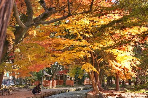 【写真】紅葉 : 上賀茂神社
