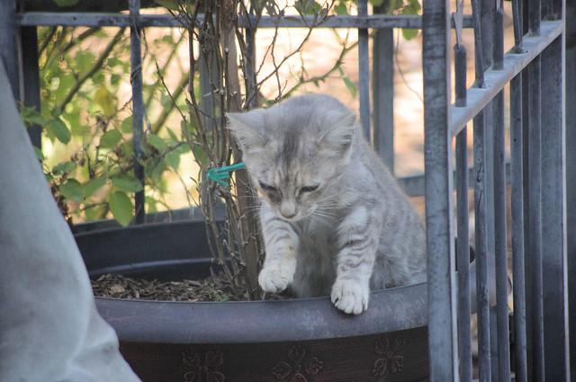 2012_09_30_2012 cats 002