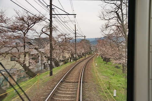 【写真】桜 : 宇多野-鳴滝間