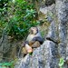 Monkey at Halong Bay