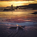 Sunset starfish by murphyz