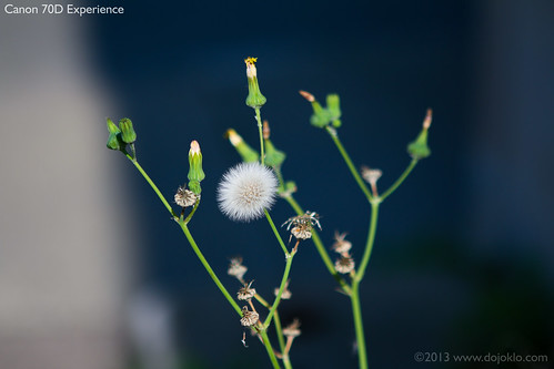 Canon 70D image quality detail sample focus autofocus hands on tips tricks processed post-process, picture style