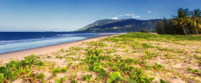 wangetti beach - photo #43