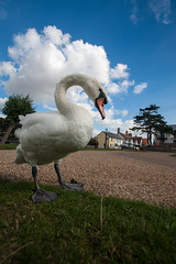Swan at Thorpeness Meare Suffolk