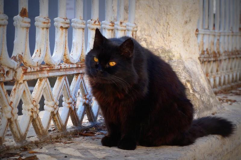 Stray-Cats-Istanbul-(14)