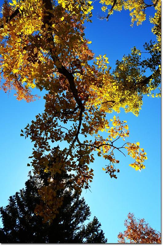 Harlow Platts Park, Boulder (16)