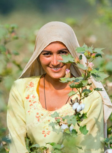 million dollar smile, Cotton-picking women exposed to pesticide poisoning