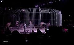 Circo Americano tigre