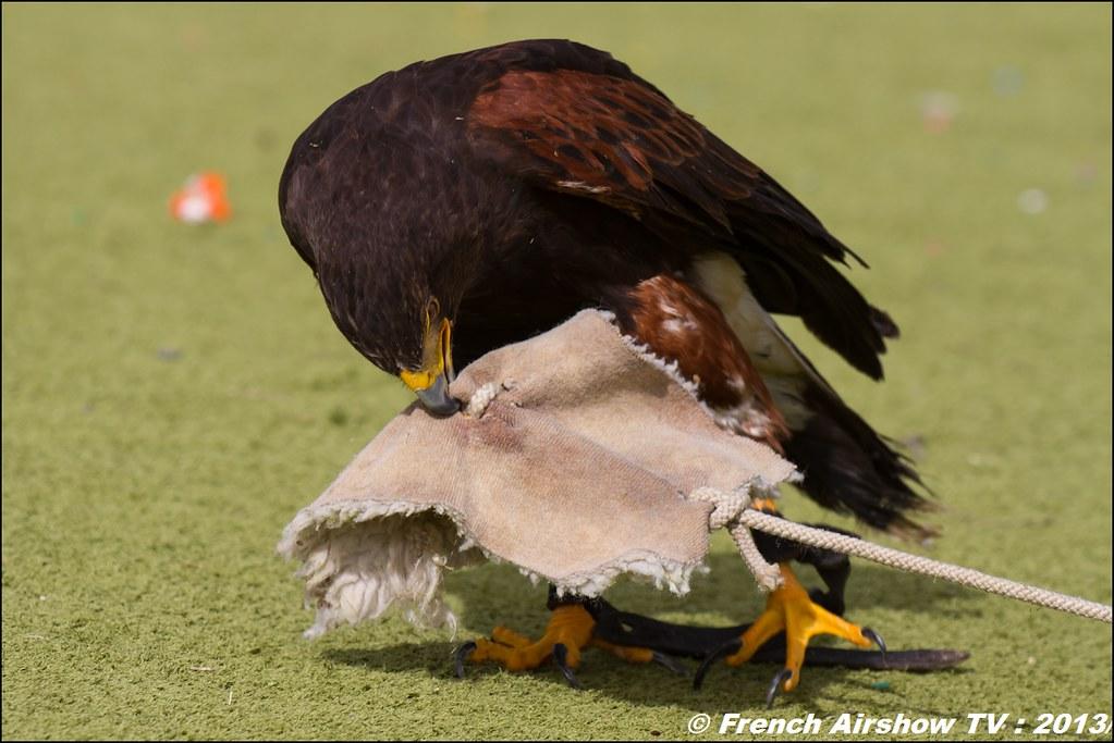 Les Aigles du Léman a Coupe Icare 2013