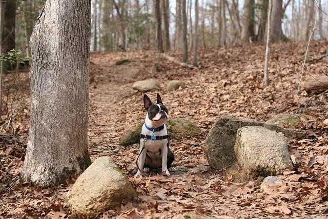 Charlie Powhite Hike Feb 2 (19)