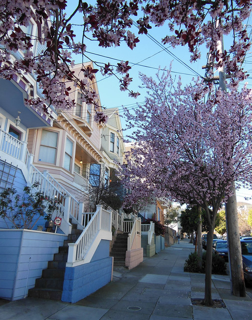 Noe Valley Cherry Blossoms
