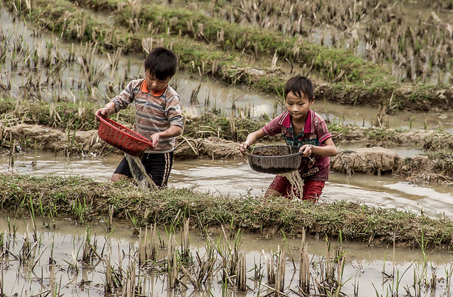Boys working in the paddy field, Sa Pa, Vietnam
