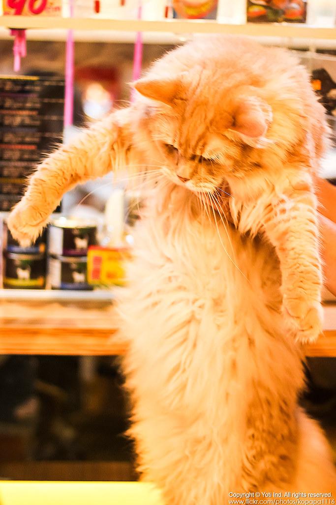 元氣貓主題餐廳 IMG_6104