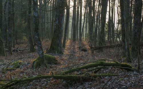 wood sunset forest 50mm spring oak mark oaks hdr västragötaland västergötland 3exposurehdr sjuhärad fotskäl sörvilg