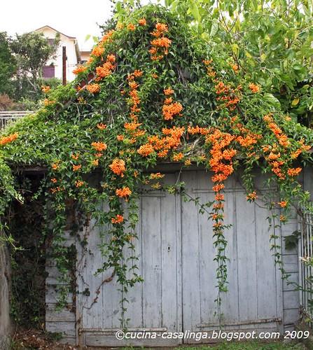 Garage mit orangen Blumen