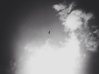 A hawk above my yard.