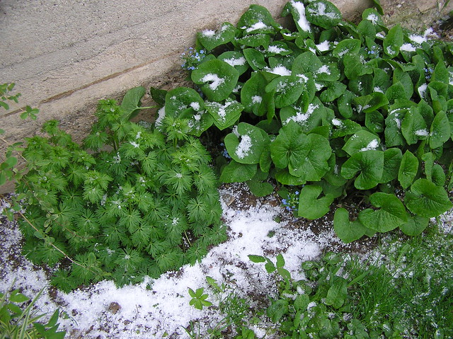 Hail in May