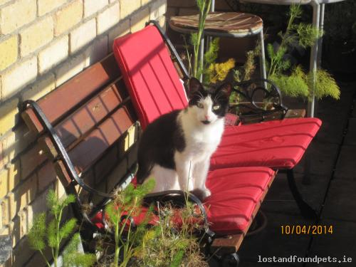Thu, Apr 17th, 2014 Lost Female Cat - Ashtown, Dublin 15