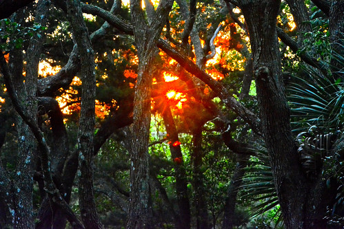 2014 everything florida spring clear staugustine early forest travel landscape morning nature outdoor trees woods sunny sunrise tree day lighthouse ligthhouses