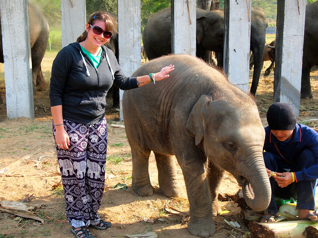 Volunteering at Elephant Nature Park