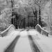 Sneeuw in Westerwolde by Fenneke Wijnia