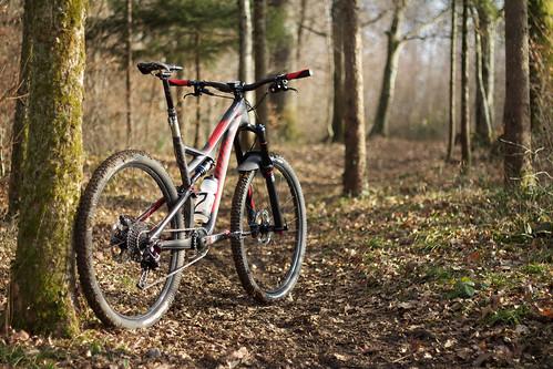 Stumpy on Trail II